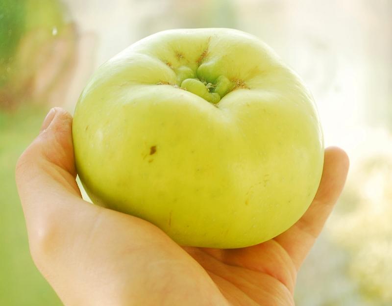 Jabłko do gotowania