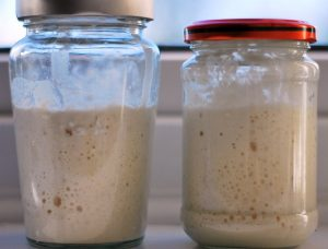 Sourdough starter